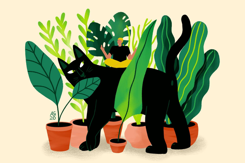House Jungle illustration Ana Gaman